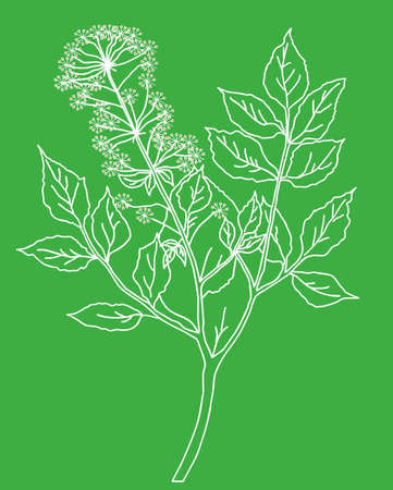 silhouette of the plant on green background photo