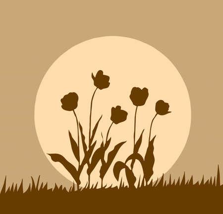 silhouette tulip on background sun photo