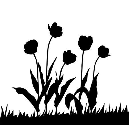 drawing tulip on white background Stock Photo - 11081484