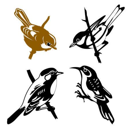 pajaro dibujo: conjunto de las aves en el fondo blanco