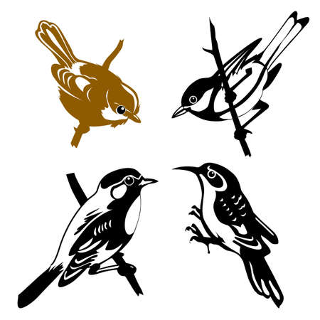 set of the birds on white background Vector