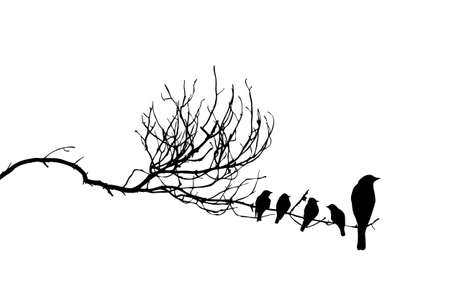 flock of birds: vector silhouette of the birds on branch