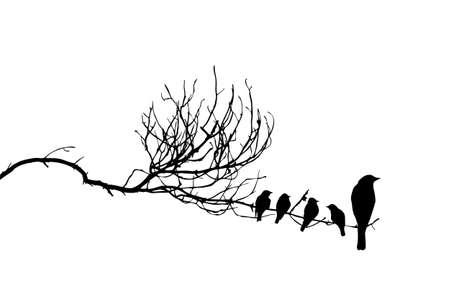 bandada pajaros: vector silueta de los pájaros en la rama Vectores