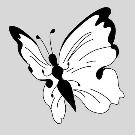 blanching: vector blanching butterfly on gray background