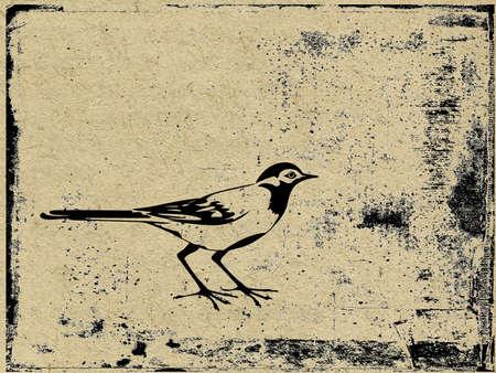 vector silhouette  bird on grunge background Vector