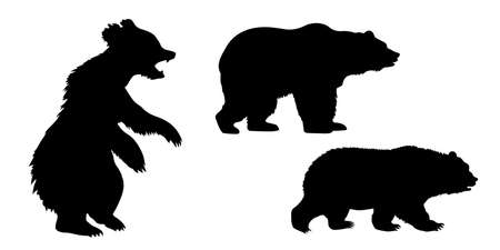 grizzly: vector set of the bears on white background