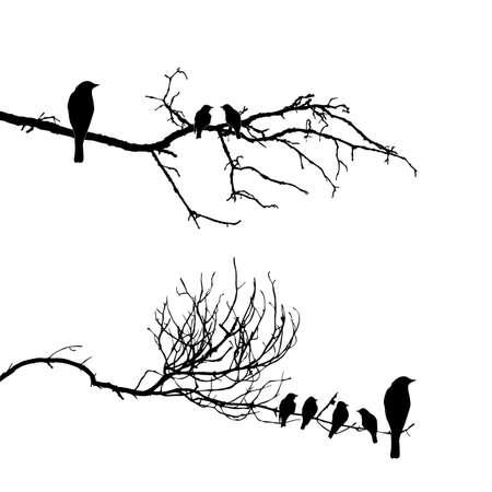 bandada pajaros: vector de la silueta de los pájaros en la rama