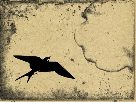 vector flying swallow on grunge background