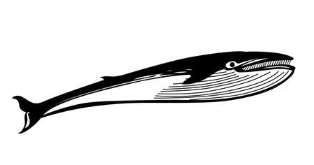 vector drawing whale on white background Vector