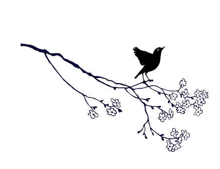 tomtit: vector bird on branch on white background