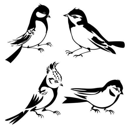 veréb: vektor, madarak, árnykép, fehér háttér, vektoros illusztráció Illusztráció