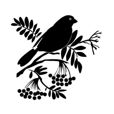 vector bird silhouette on white background, vector illustration Vector
