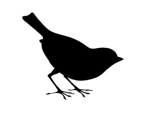 veréb: vektor madár sziluettje fehér alapon, vektoros illusztráció Illusztráció