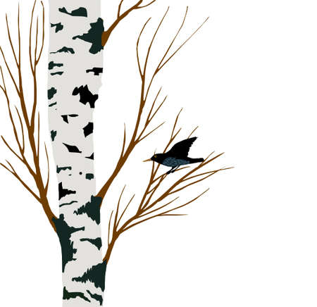 birches: starling on birch drawing, vector illustration