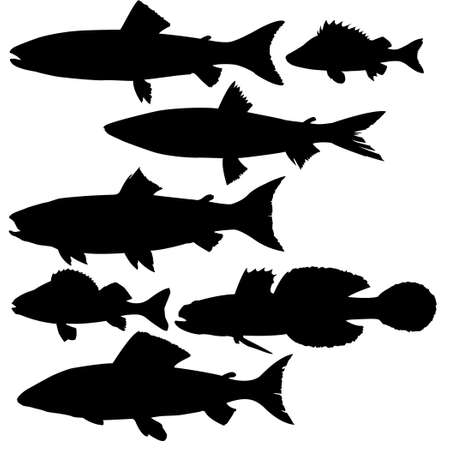 vector silhouettes of river fish on white background  photo