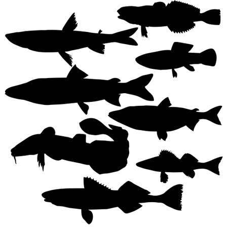 silhouettes of river fish on white background photo