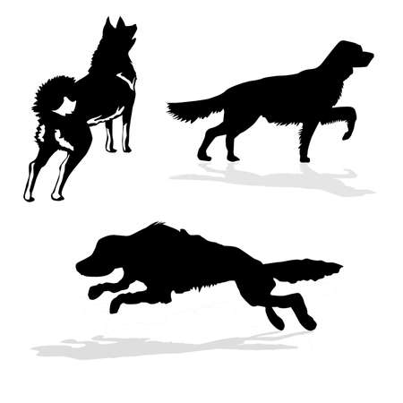 setter: vector silhouette hunt dogs on white background