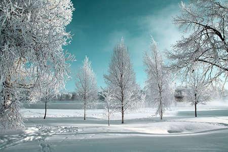 winter wonderland: brina su alberi Archivio Fotografico