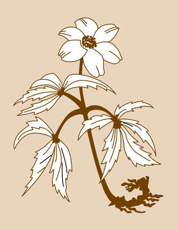 anemones: field flower silhouette on brown background, vector illustration