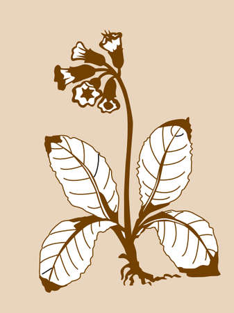 field flower silhouette on brown background, vector illustration Vector