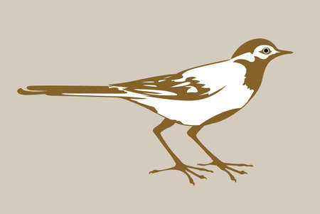 wagtail silhouette on brown background, vector illustration Vector