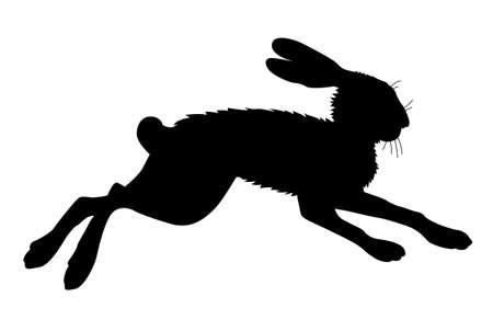 lepre: lepre silhouette su sfondo bianco, illustrazione vettoriale Vettoriali