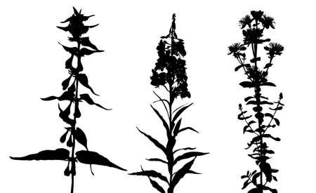 flowerses: flowerses silhouette on white background, vector illustration Illustration