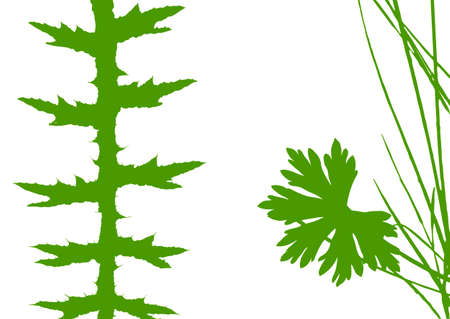 pasturage: herb silhouette on white background, vector illustration Illustration