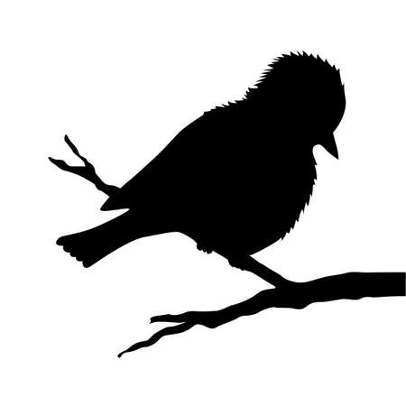 bird on branch silhouette on white background Vector