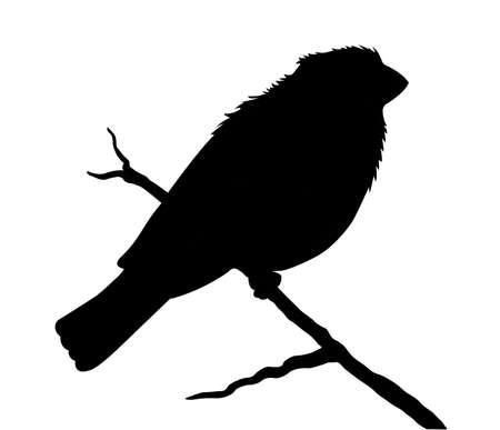 sylwetka ptaka na białym tle
