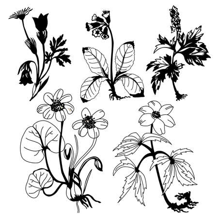flowerses: field flowerses on white background, vector illustration Illustration