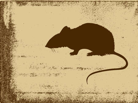 rat silhouette on grunge background, vector illustration