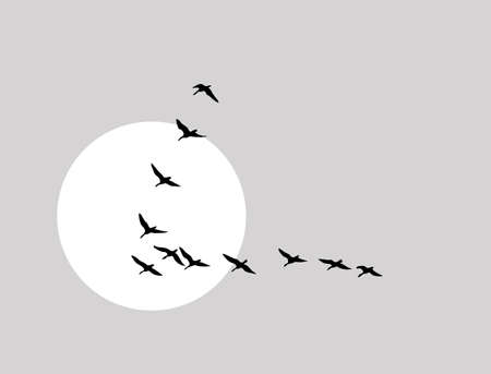 migrations: flying ducks silhouette on solar background