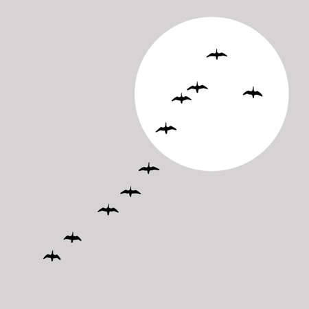 migrating animal: flying ducks silhouette on solar background