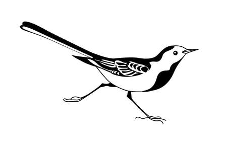 wagtail silhouette on white background Vector