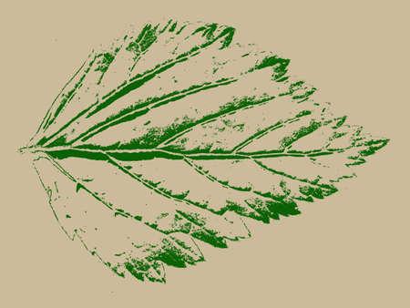 green sheet on grunge background Vector