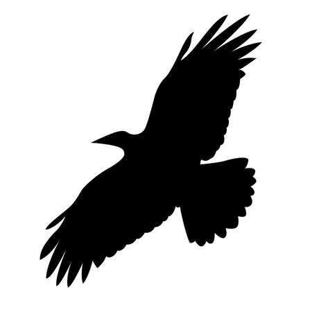 flying bird on white background, vector illustration Vector