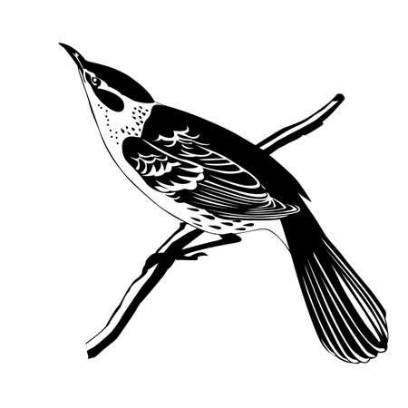 tomtit: thrush silhouette on white background, vector illustration