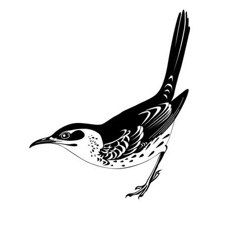 thrush silhouette on white background, vector illustration Vector