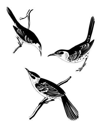 pajaro dibujo: aftas silueta sobre fondo blanco, ilustración vectorial