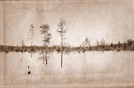 pine wood on grunge background photo