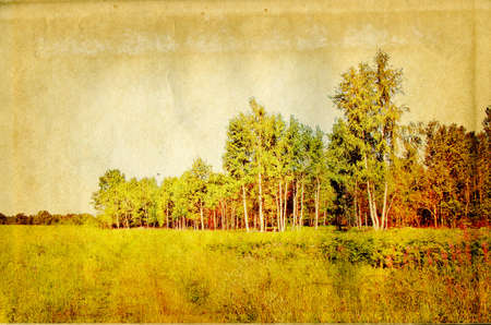 copse: birch copse on old paper