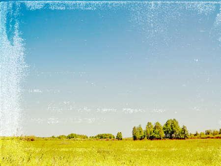 copse: birch copse on grunge background  Stock Photo