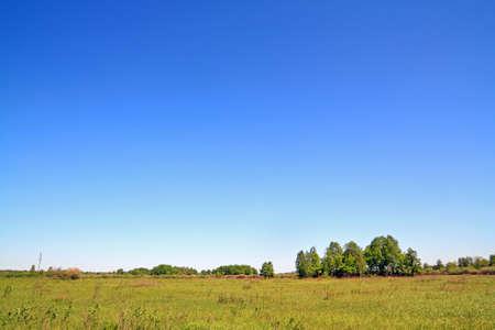 copse: birch copse on autumn field