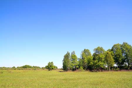 birch copse on autumn field Stock Photo - 12247299
