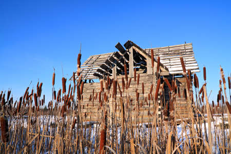 bulrush near wooden rural building photo