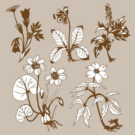 flowerses: field flowerses on brown background, vector illustration
