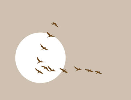 flock of birds: flying ducks silhouette on solar background, vector illustration