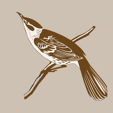 tomtit: thrush silhouette on brown  background, vector illustration
