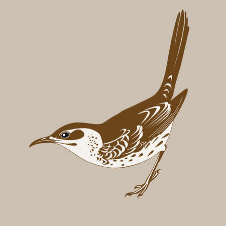 thrush silhouette on brown  background, vector illustration Vector